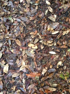 just leaves, dirt, and fir cones, but still