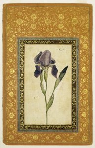 Blue Iris, looking fairly benign to me (wikimedia)